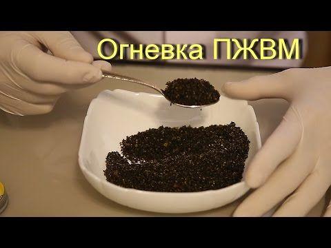Настойка огневки пчелиной на ПЖВМ . - YouTube