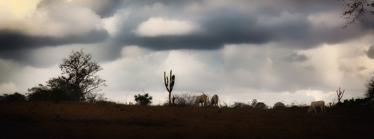 Photo by Gilberto Grosso - A landscape dominated by drought inclement 9