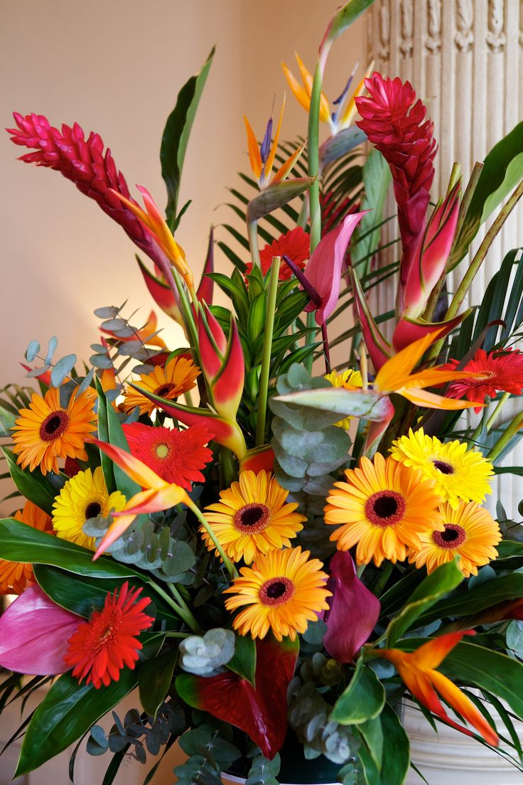 an overview of the exotic flower the bird of paradise flower Overview tropical bird of paradise plants are relatively easy to grow and make a beautiful landscape plant being related to bananas, they have large dark green.
