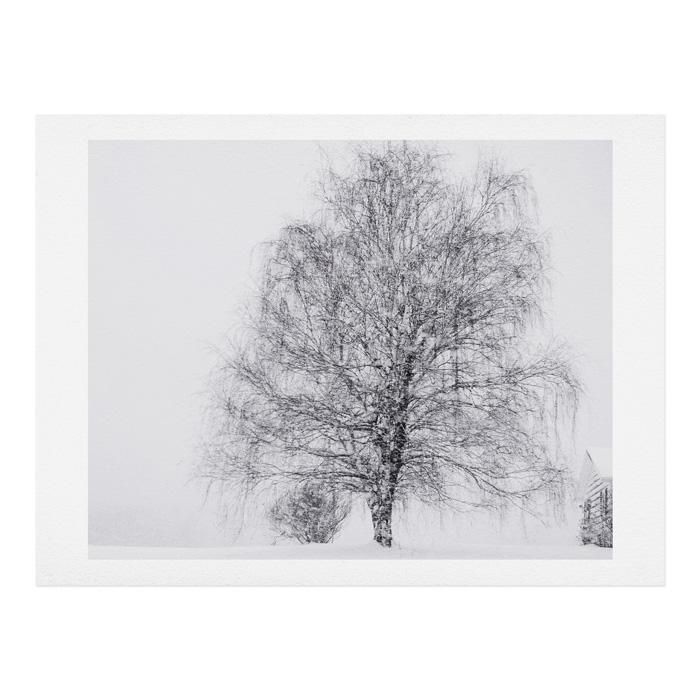 The Willow And The Snow Art Print Chelsea Victoria