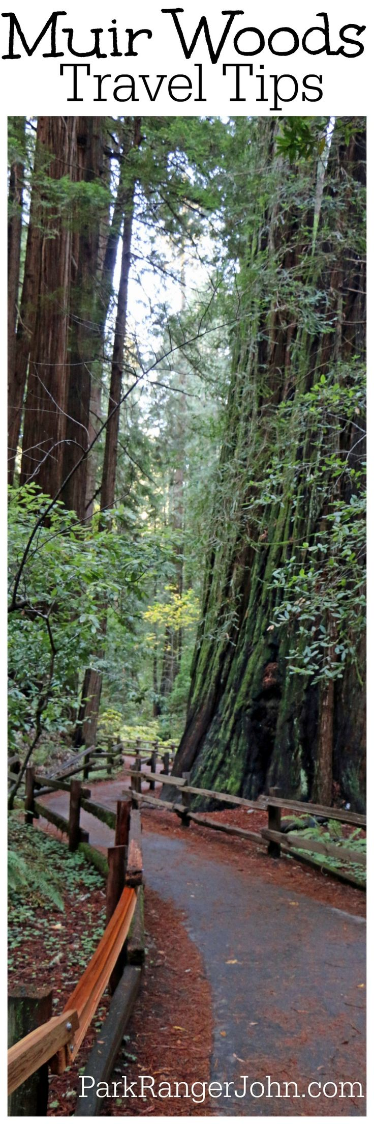 how to go to muir woods from san francisco
