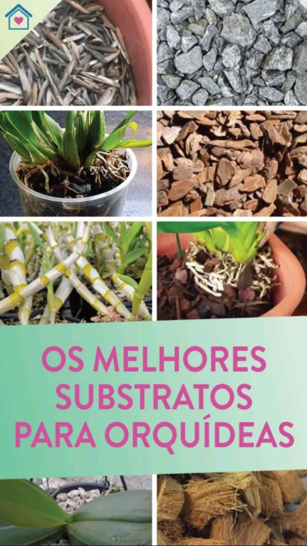 Eco Garden, Planting Shrubs, Planting Vegetables, Blue Orchids, Yellow Flowers, Tomato Fertilizer, Tomato Garden, Agaves, Orchid Care