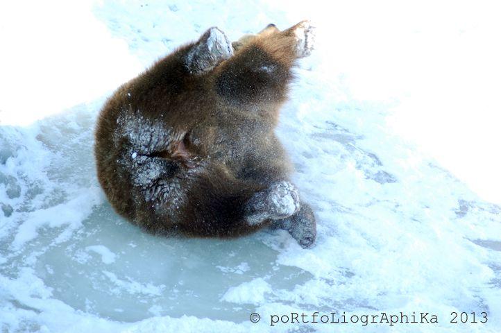 Portfolio Multimedeia: Karhut ovat heränneet! Karhun hymy: Kevät on tullut!
