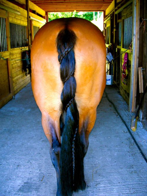 Spiral dutch horse tail braid, this would be cool for classes that don't have braiding requirements