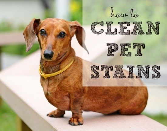 Here S How To Clean Pet Stains Of All Sorts Urine Vomit