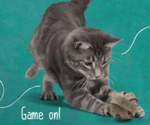 les 25 meilleures id 233 es concernant pipi de chat sur odeur de pipi urine de chat