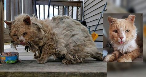 Cat Found Covered in Matted Fur Wandering Outside Completely Transforms in One Day...
