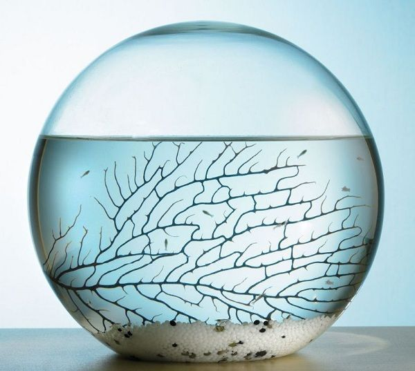EcoSphere Closed Aquatic Ecosystem - iwantdis. All the stuff you really really want