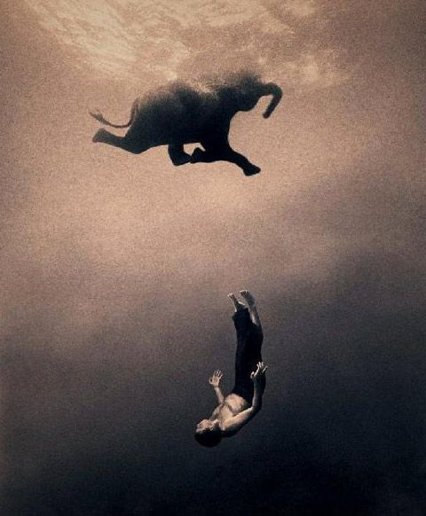 Fotografía de Ashes and Snow. #Animales #Elefantes #GregoryColbert #AshesAndSnow #LoveAnimals