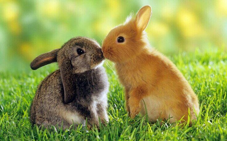 Kissy kiss <3