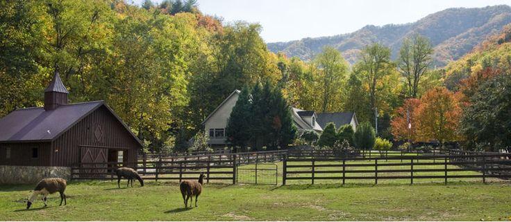 Our Venue Llama Barn And Main House At The Hawkesdene
