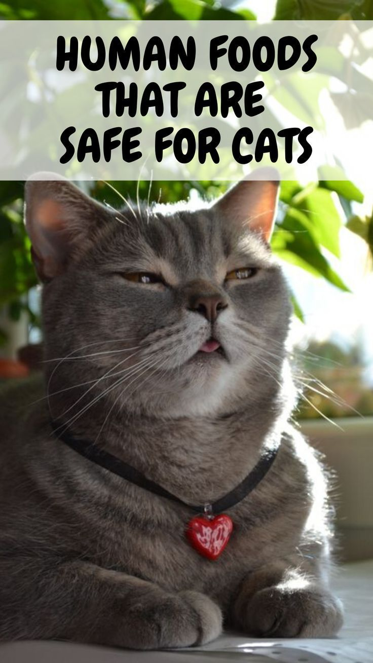 Human Foods That Are Safe For Cats In 2020 Foods Cats Can Eat Cat Facts Cats