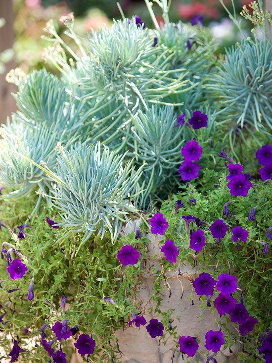Exceptionnel 33 best Senecio images on Pinterest | Succulent plants, Mount  OM72