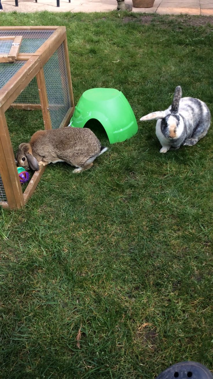 Flopsy n Hop outside after a bit of bonding time with their owners!