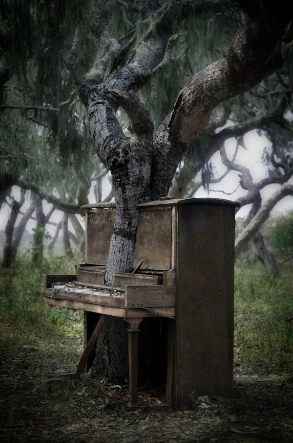 """The Piano Tree"", found and captured by Tyler Sessa.  {as seen in Monterey Bay, California.}"
