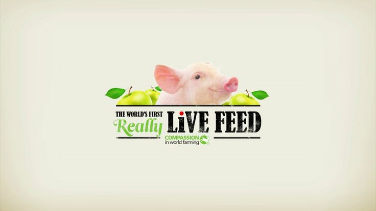 Compassion in World Farming - Eat Street @ Westfield on Vimeo Passers by could download an app and purchase apples to throw into a real live pig pen. It was timed around the horse meat scandal to amplify the free range message
