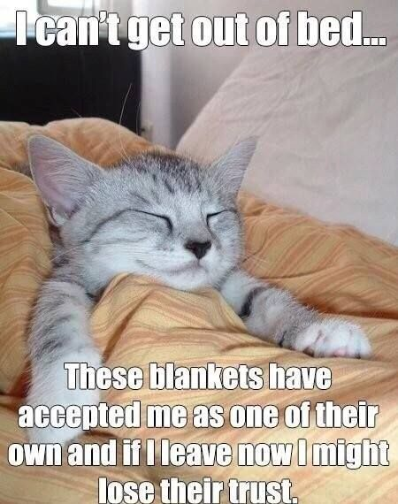 I Can't get outta bed.. These blankets have accepted me as one of their own, and if I leave now, I might lose their trust!