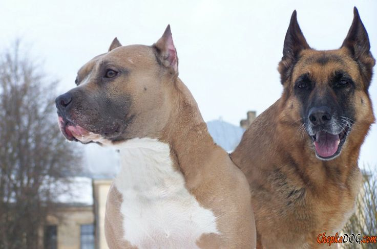 Photos of beautiful dogs