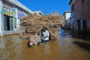 A man walks his donkey through the flooded streets of Beledweyne, Somalia