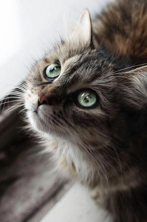 Cat Litter Sale Bringing Home Kitten Kitty Birthday Party Maincoon Cats In 2020 Cats Pretty Cats Beautiful Cats