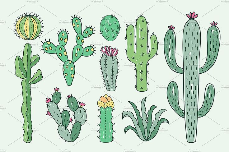 Cactus collection by redchocolate on @creativemarket