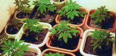 Best Cannabis Nutrients