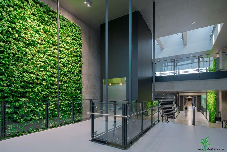 Plantevægge på SDU #plantevæg #indretning
