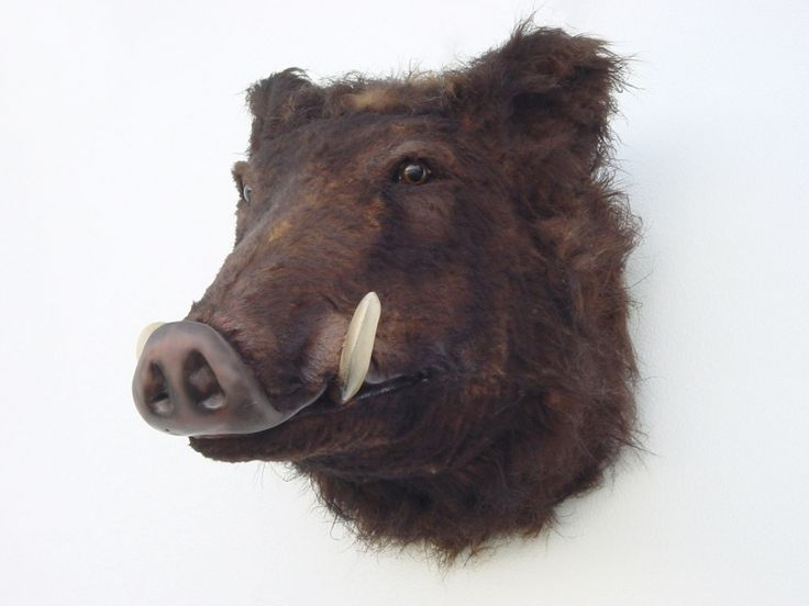 40 Best Images About Mounted Heads On Pinterest Wall