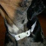 DIY dog collarFree, Crafts Ideas, Dog Collars, Dogs Stuff, Collars Diy, Pets Dogs, Dogs Collars, Fiber Art, Diy Dogs