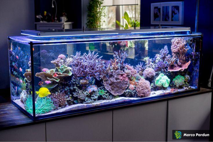 ein 400l raumteiler 150x50x50cm seite 7 aquarium vorstellung meerwasser. Black Bedroom Furniture Sets. Home Design Ideas
