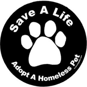 Adopt a Pet:  Plectron, Dogs,  Plectrum, Pet Girls, Adoption A Pet, Shelters Pet, Pet Adoption And Rescue, Homeless Pet, Animal