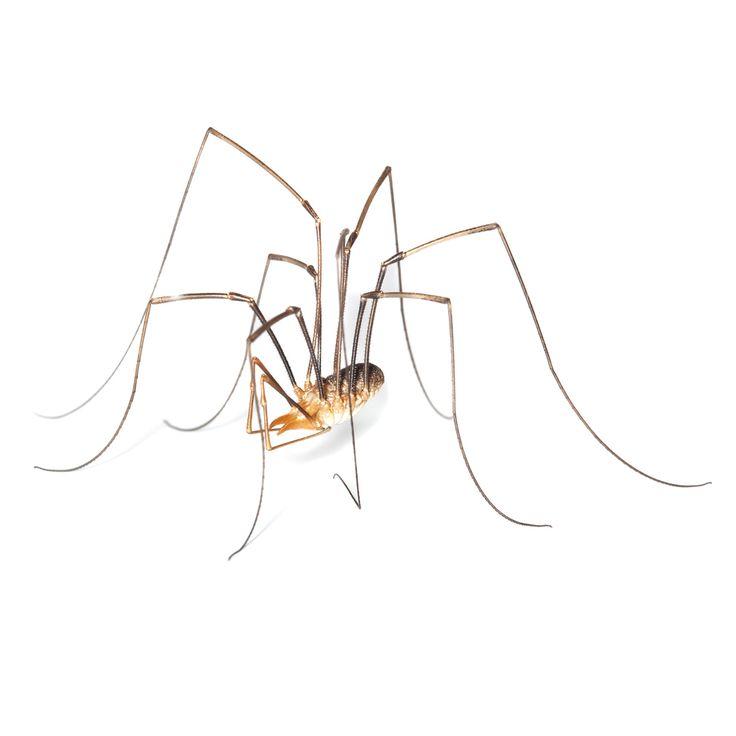 Mejores 11 imágenes de Spiders en Pinterest | Arañas, Araña reclusa ...