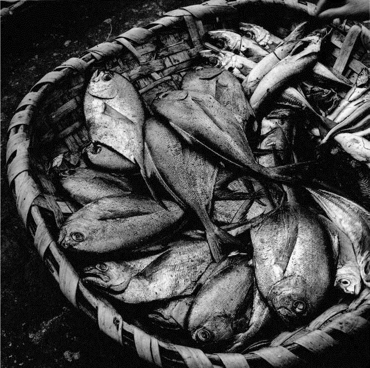 ..Fish, Vigo, 1961, Galice, Spain by Jean Dieuzaide. Learn Fine Art Photography - https://www.udemy.com/fine-art-photography/?couponCode=Pinterest22