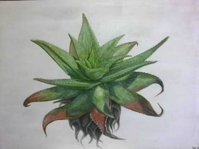 Aloe Maculata 2 ~ Block Mounted Oil Painting by Dawn Du Preez #DawnDuPreez