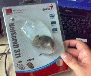 Beginilah Bentuk Mouse Yang Sebenarnya?