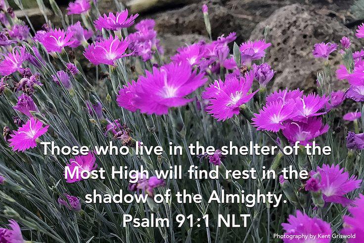 Shelter - Psalm 91:1