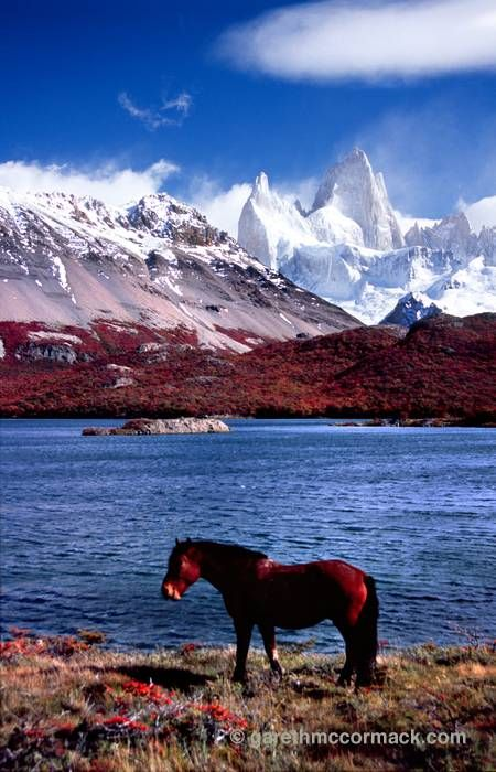 Horse and Mt Fitz Roy from Laguna Capri, Parque Nacional los Glaciares, Patagonia, Argentina. Stock Photo