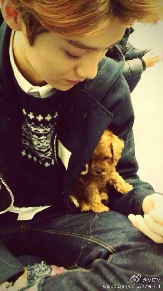 Luhan's weibo update with puppy ^o^ !!! I just realized thats the puppy from the Miracles In December MV