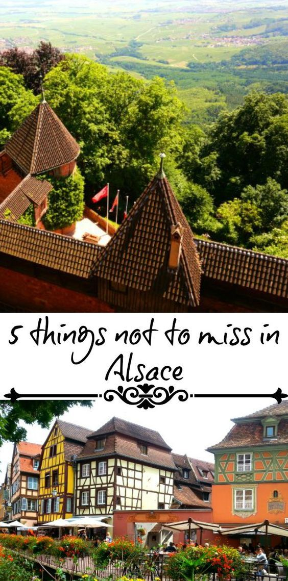 Alsace in France is not to be missed. Have you had a wine and feed a monkey in Alsace