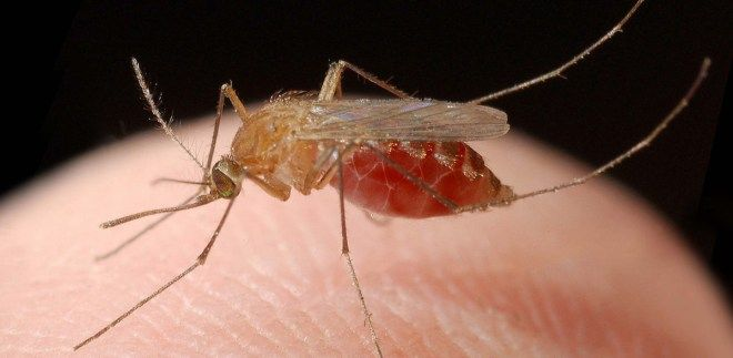 Mosquitos  And if we are talking about diseases, no one spreads them like mosquitos. From Malaria alone – about 1,000,000 people die every year!