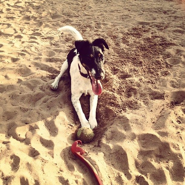 #dog #tired #walk #beach