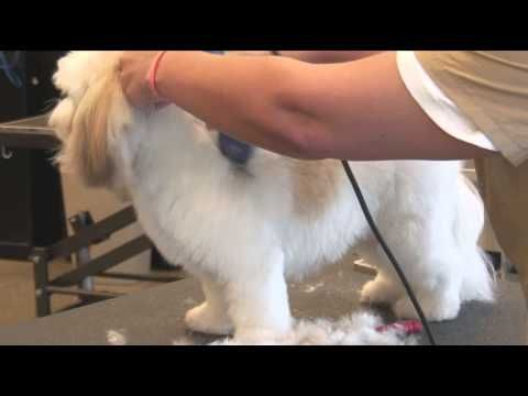 ▶ How to Use Clippers when Grooming a Shaggy-Haired Dog : Dog Grooming - YouTube