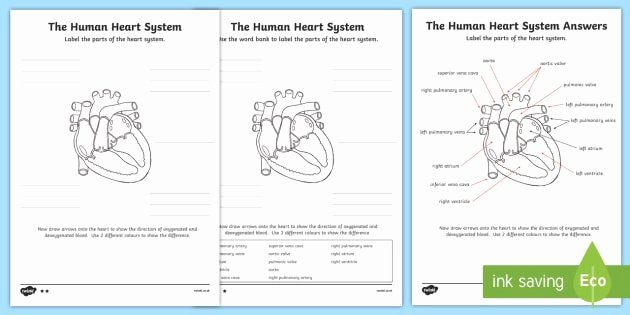 Blank Heart Diagram to Label the Human Heart ...