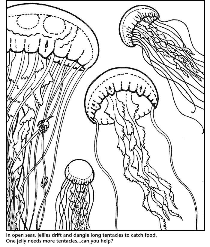 monterey bay aquarium jellies coloring page