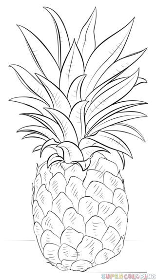 How to draw a pineapple | Step by step Drawing tutorials