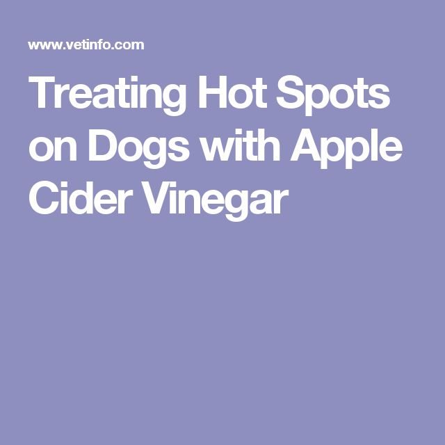 Treating Hotspots On Dogs With Apple Cider Vinegar