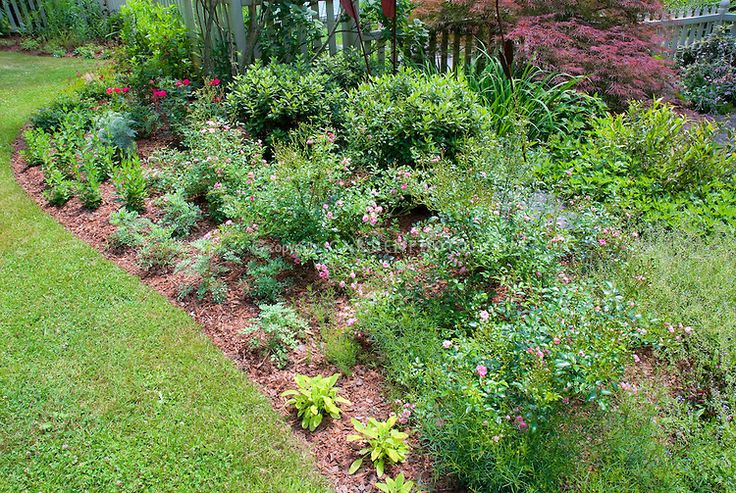 Mulched garden bed with pink rosa roses perennials for Ornamental grass bed design