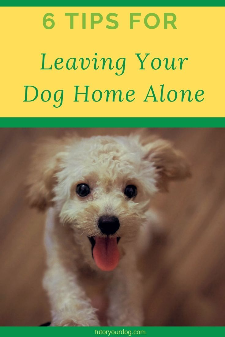 How To Help A Dog With Separation Anxiety Pranapets Com Prana