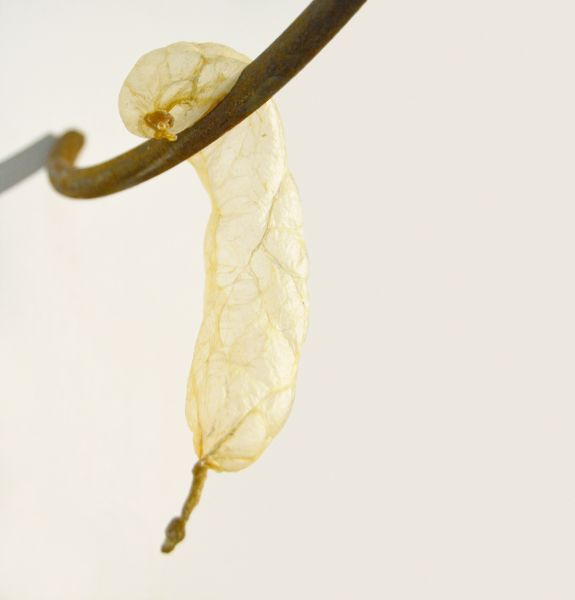 2015 Ané Lategan Viscera Installation, dimensions variable Pig gut, found metal
