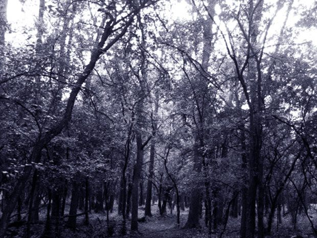 From the Devil's tramping ground to a wooded Bermuda Triangle, you do not want to take a stroll through these freaky forests.